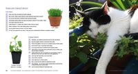 Cat Grass & Catnip excerpt from the Cattery Design book